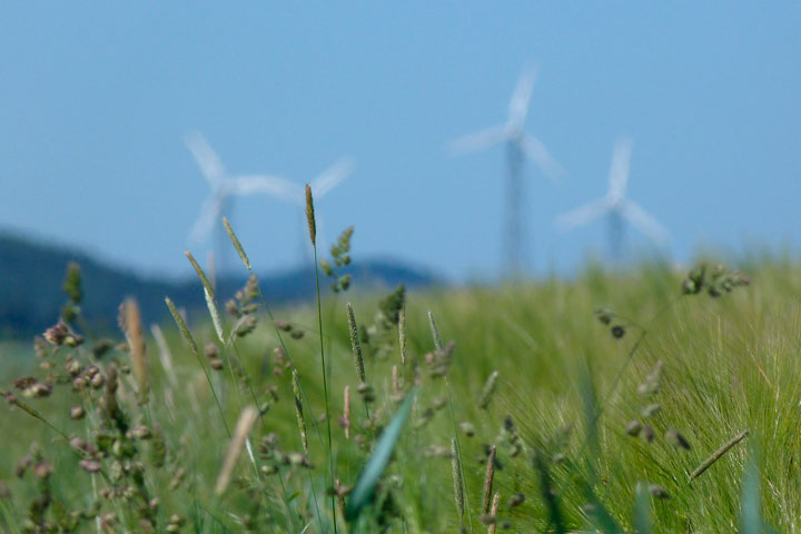 Wind turbines against blue sky, with green grass in the foreground.