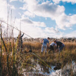 Peatland farming could protect vital carbon sink
